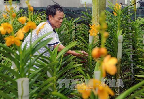 HCM City keen on hi-tech agriculture