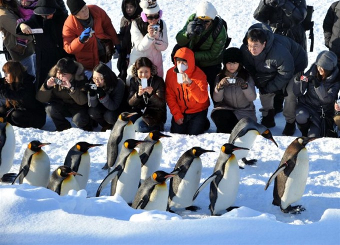 Canadas bitter weather has even penguins coming out of the cold