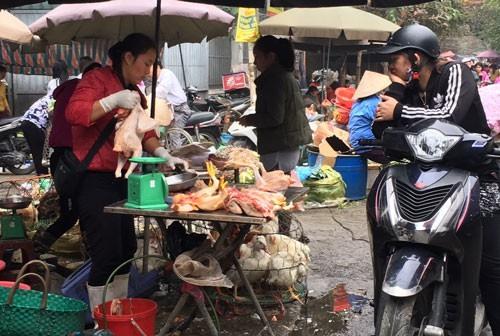 Bird flu outbreak casts pall over Tết
