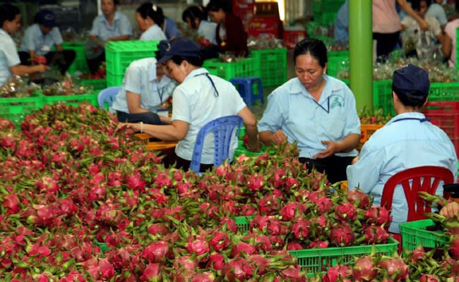 Việt Nam plans to export fruits to Qatar