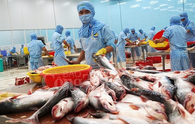 Tra fish exports to exceed 2b