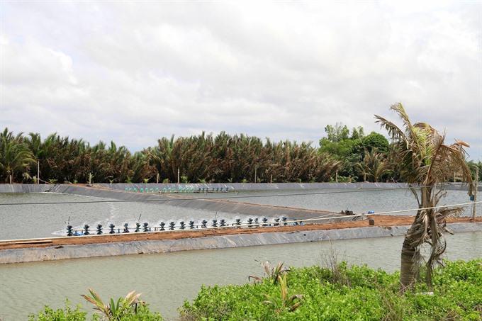 Tiền Giang develops saltwater brackish-water aquaculture