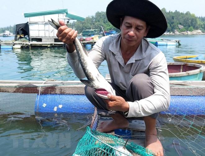 Mass fish death has farmers worried
