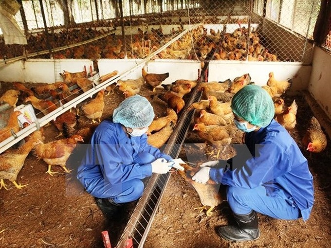 VN reports no new cases of bird flu in humans since 2014