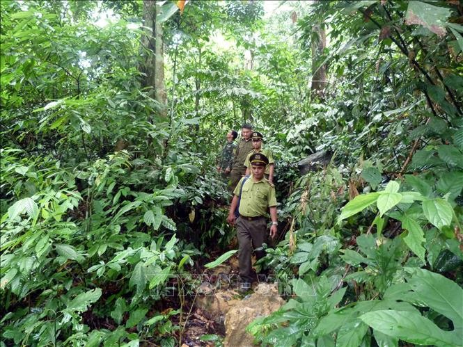 Finland helps Việt Nam to build forestry database
