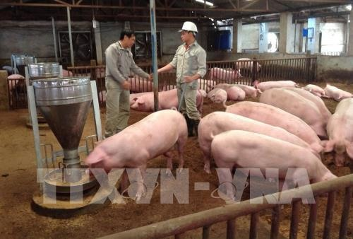 VN needs natl framework for safe pork