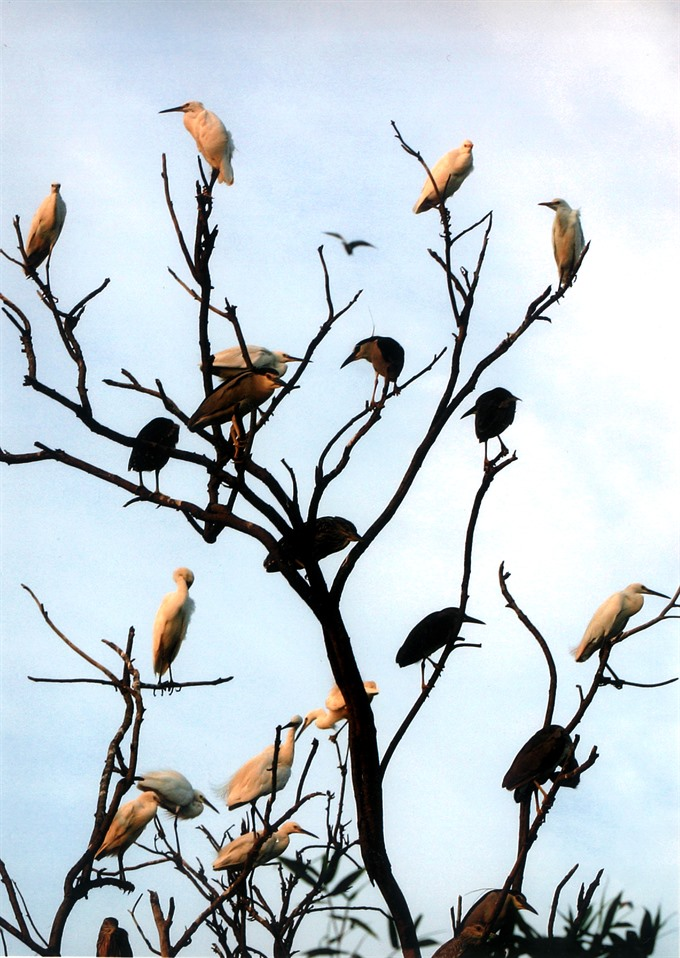 Bird haven hosts eco tourism hotspot