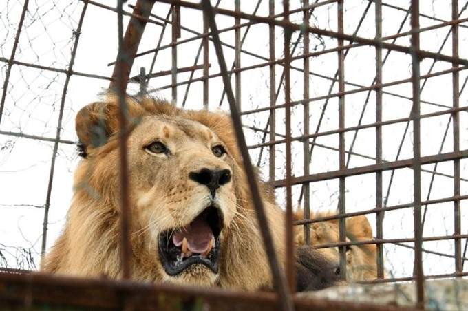 Animals rescued from 'hellish Albanian zoo
