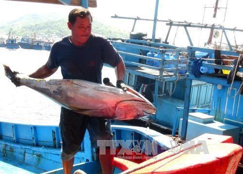 Bình Thuận looks to coastal economy