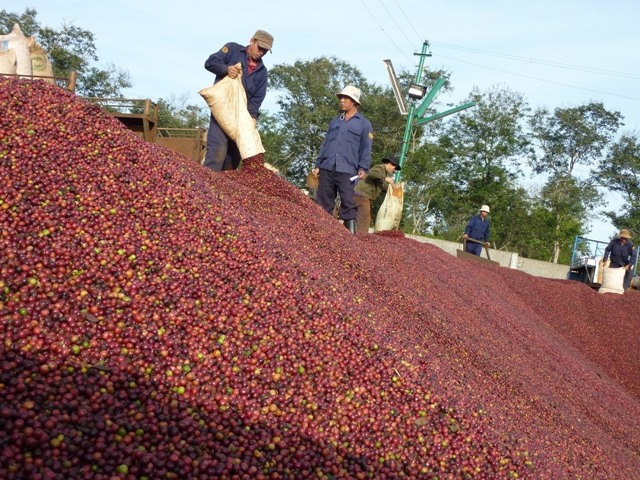 Coffee exports rise but value stagnates