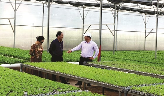 Authorities seek ways to promote VietGap vegetables