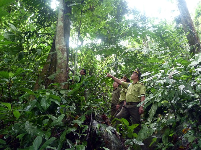 Saving the forests offers opportunities to grow