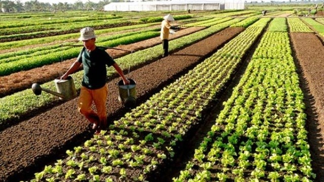Policy obstacles hinder the development of agricultural land