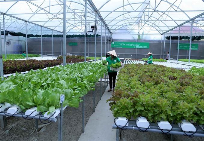 Cần Thơ uses high-tech to increase farmers profits