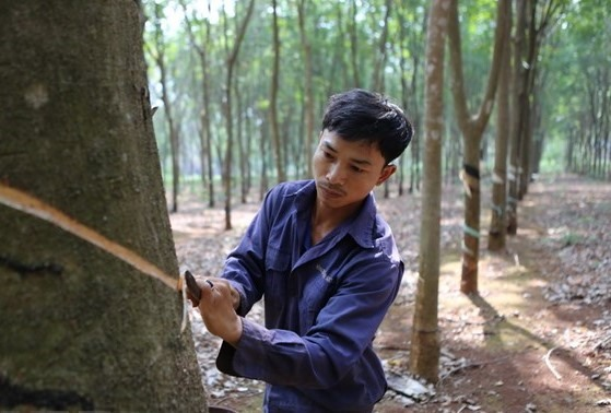 Vietnam Rubber Group to reduce output