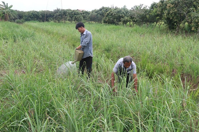 Tiền Giang adopts new farming models to cope with changing climate
