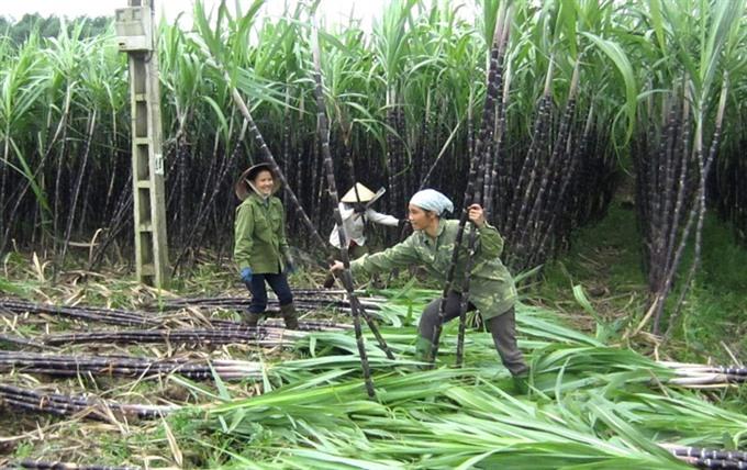 Hòa Bìnhs safe farm produce promoted in Hà Nội