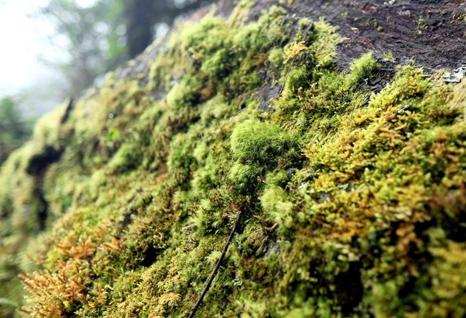Primitive forest offers wild exploration
