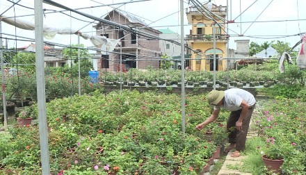 Ninh Bình farms go high-tech