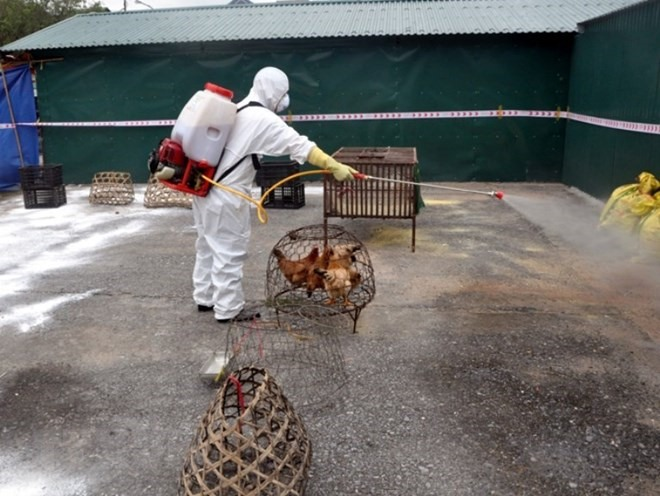 Provinces take steps to control avian flu outbreak