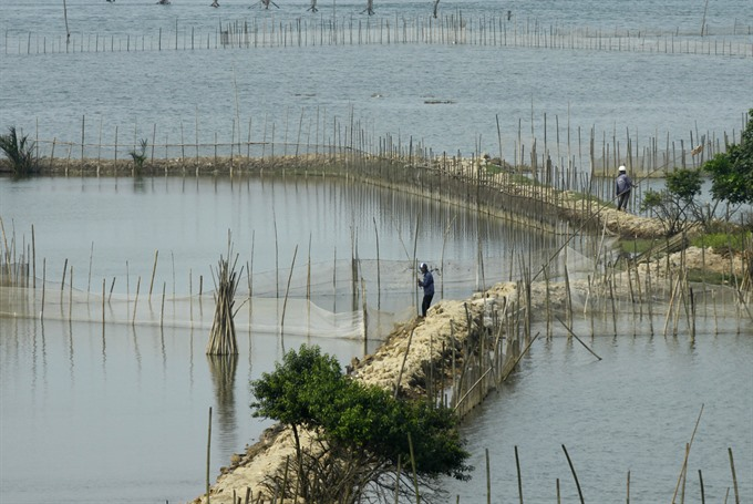 Việt Nam needs a master plan for development of shrimp farming on sandy land