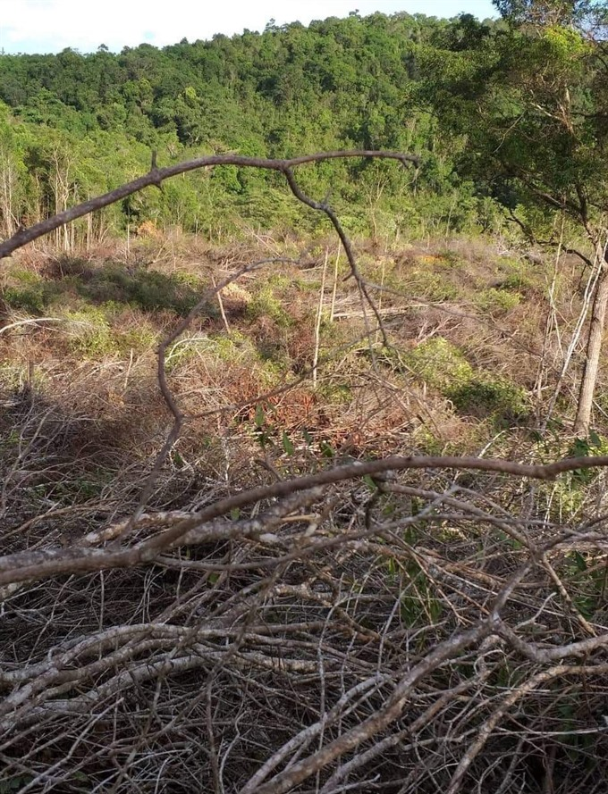 Gia Lai company prosecuted for deforestation
