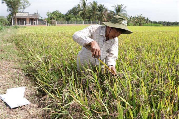 No degree no problem for this rice innovator