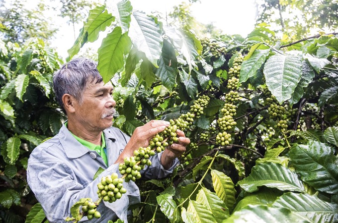 Bayer in private sector alliance to support coffee smallholder farmers