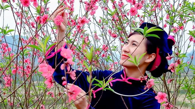Peach blossom festival in Lạng Sơn