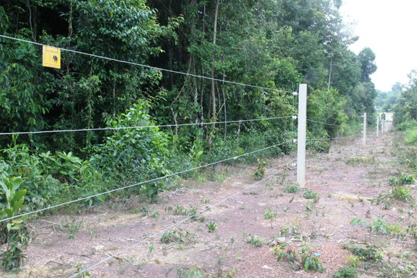 Electric fence not enough to protect elephants: experts
