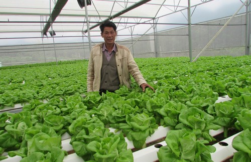 Đà Nẵng to invest in clean vegetables