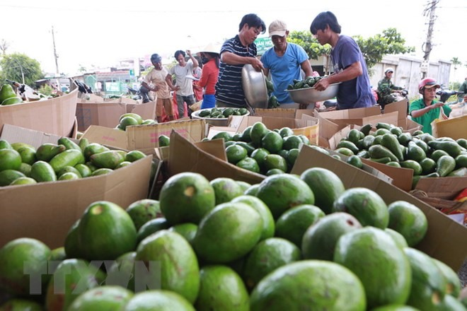 VN seeks to accelerate agricultural restructuring