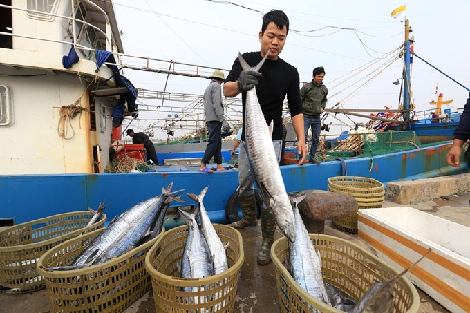 Việt Nam works to stop illegal fishing
