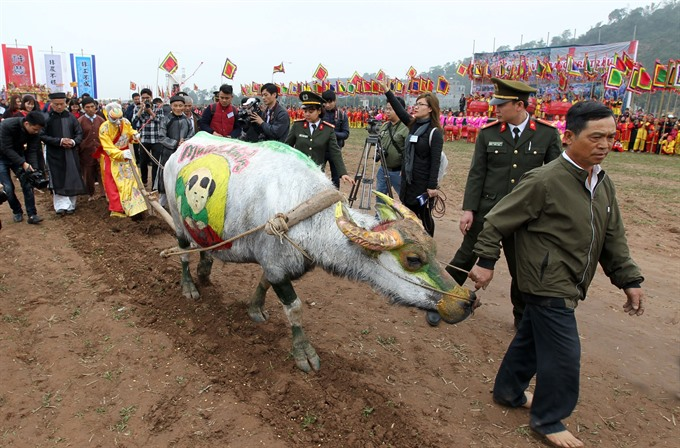 Annual ploughing festival opens in Hà Nam Province