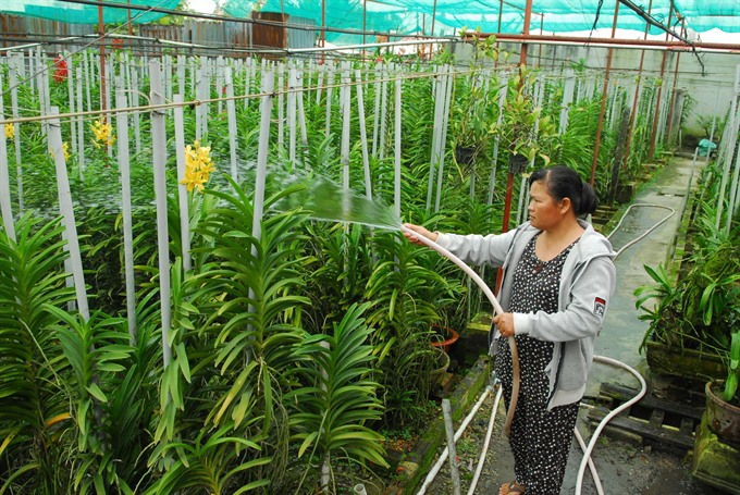 Vĩnh Long to revamp agriculture