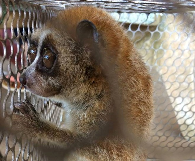 72 wild animals rescued in January