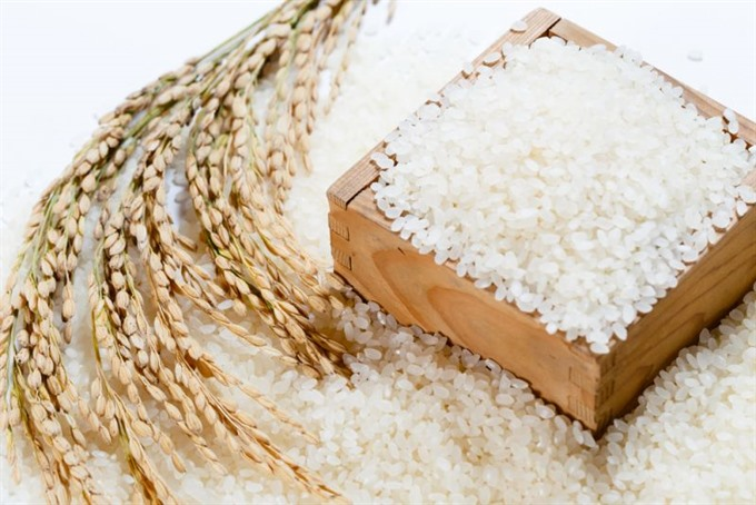 Japonica to become Việt Nams leading export rice