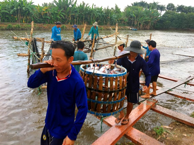 US to inspect Việt Nam catfish controls