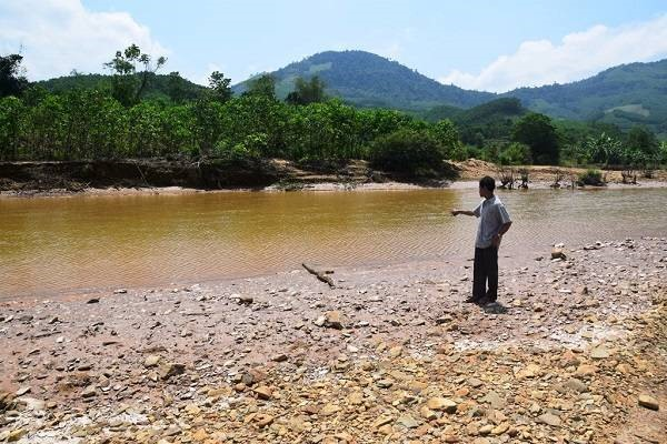 Quảng Nam to investigate massive fish death