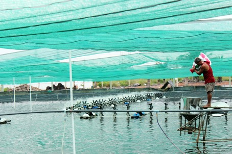 Đồng Nai switches to sophisticated aquaculture methods