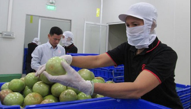 Tiền Giang tightens quality control of star apples