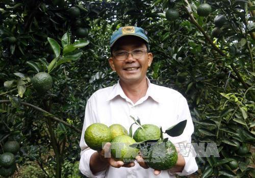 Cần Thơ eyes development of high-tech farming in semi-urban areas