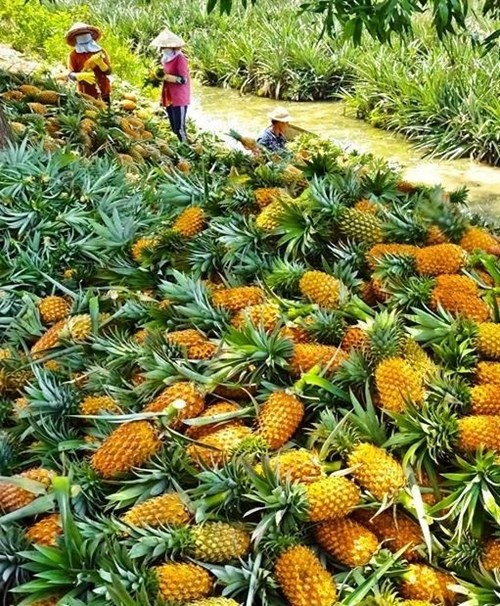 Firm keen on juice factory in Hậu Giang