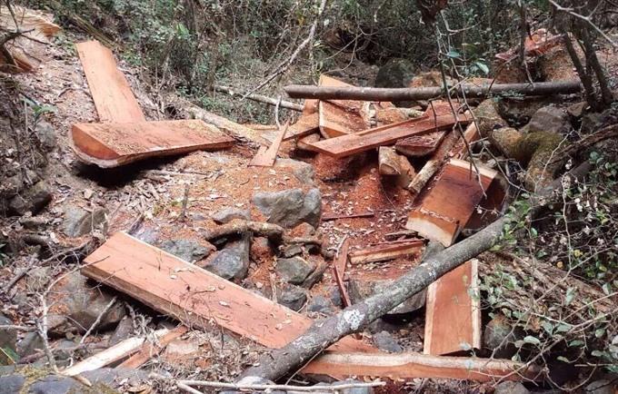Đắk Lắk seeks to inventory damaged encroached forestland