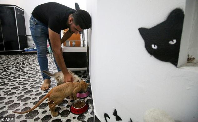 Feline pampered: Basra moggies set paw in Iraqs first cat hotel