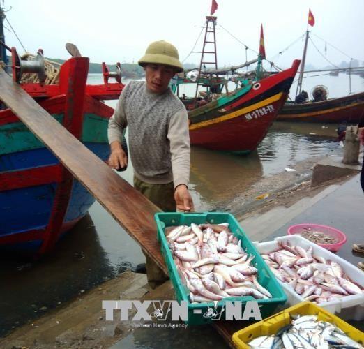 Fish catches aquaculture harvests rise