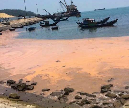 No toxin found in dead fish clams