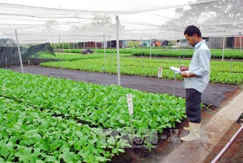 City district eyes urban farming