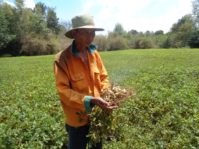 New automatic sprinklers a boon for Trà Vinh veggie peanut farmers