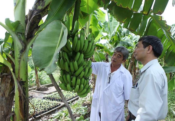 Cần Thơ to build 700ha specialised fruit farm